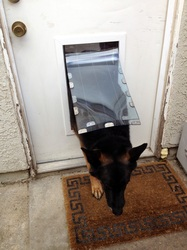 Secure Pet Doors Installed - San Jose, Santa Cruz areas, CA