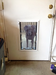 Pet Doors Installed - San Jose, Santa Cruz areas, CA