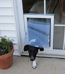 Wet Weather Pet Door Tips