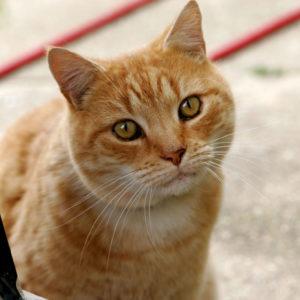 Cat Banging on Door Install a Pet Door