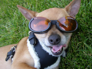 can pets wear sunscreen