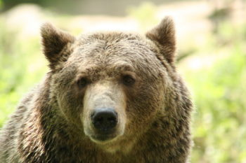 Bear Invasions and Sliding Screen Doors